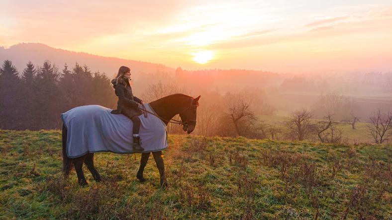Pferde, Satteldecken & Co.